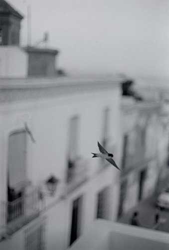 Bernard Plossu, черно-белые, фотографии, вдохновение, фотограф, франция